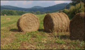 Cover photo for Hay Days
