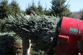 Cover photo for Postharvest Quality Christmas Tree Workshop