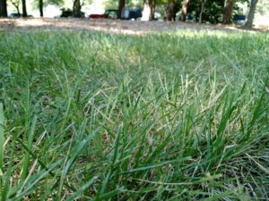 closeup of lawn