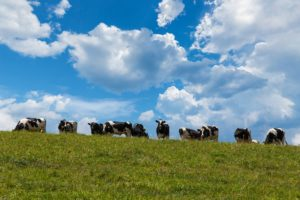 Cover photo for Livestock Needs Assessment
