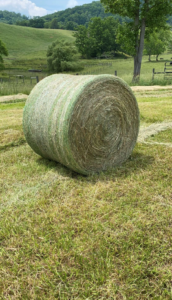 Cover photo for All Hay Is Not Created Equal