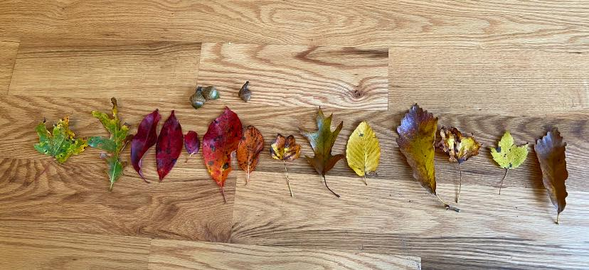 Different types of fallen leaves in hues ranging from green, to orange, red, yellow, and brown.