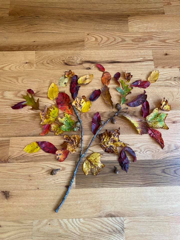 Collage of fallen leaves, acorns, and twigs creating the image of a tree.