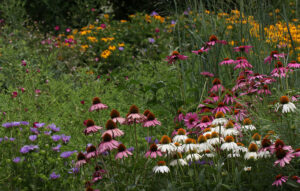 Cover photo for Enjoy a Virtual Tour of the Pollinator Paradise Garden From May and June!
