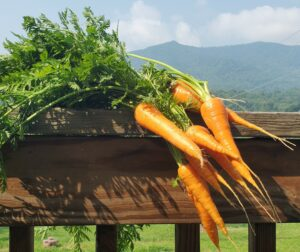 carrots in the mountains